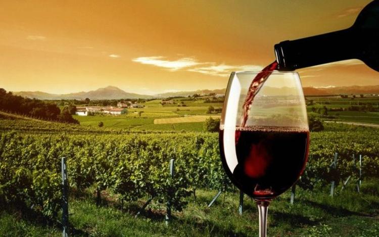 La importancia del vino y el enoturismo en España